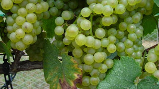 A Toast to National Chardonnay Day!