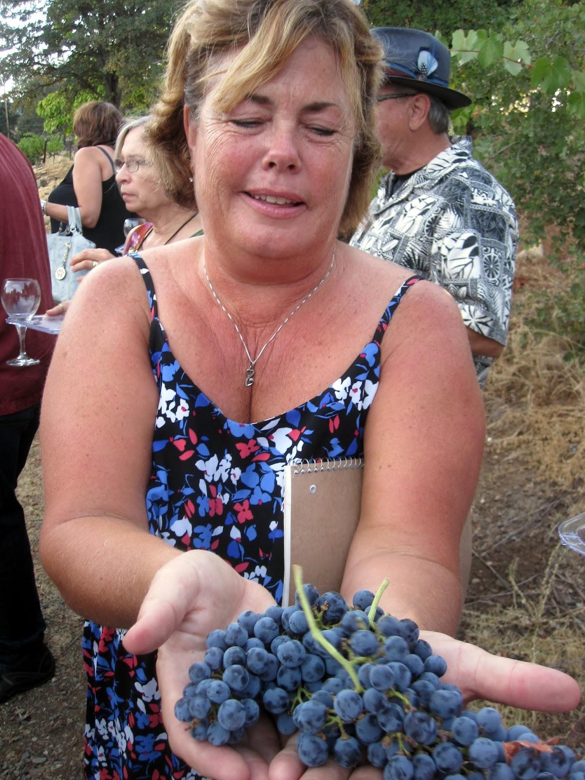 Irish Family Vineyards