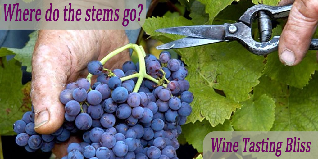 Grapes to Wine: Where do the Stems Go?