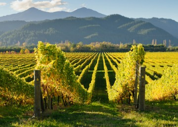 International Sauvignon Blanc Day