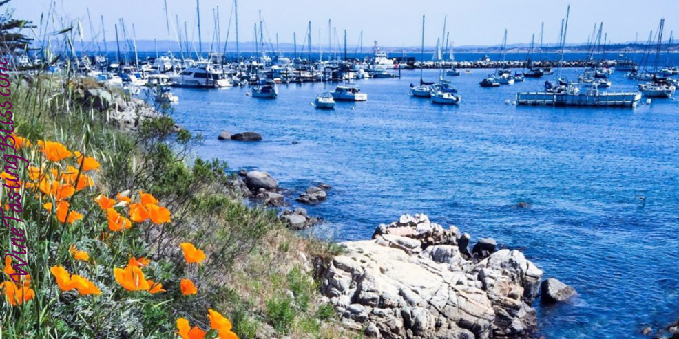 A Weekend Adventure in Monterey