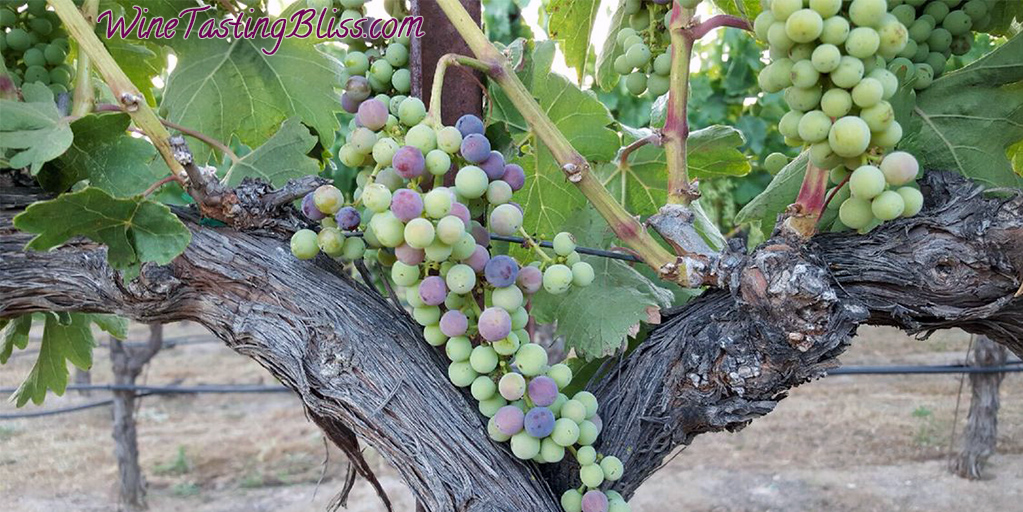 What Is Veraison and Why Should I Care?