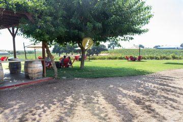 bokisch vineyard patio