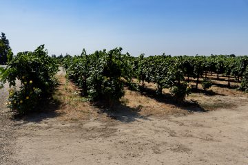 harney lane vineyards