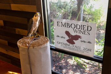 embodied wines falcon