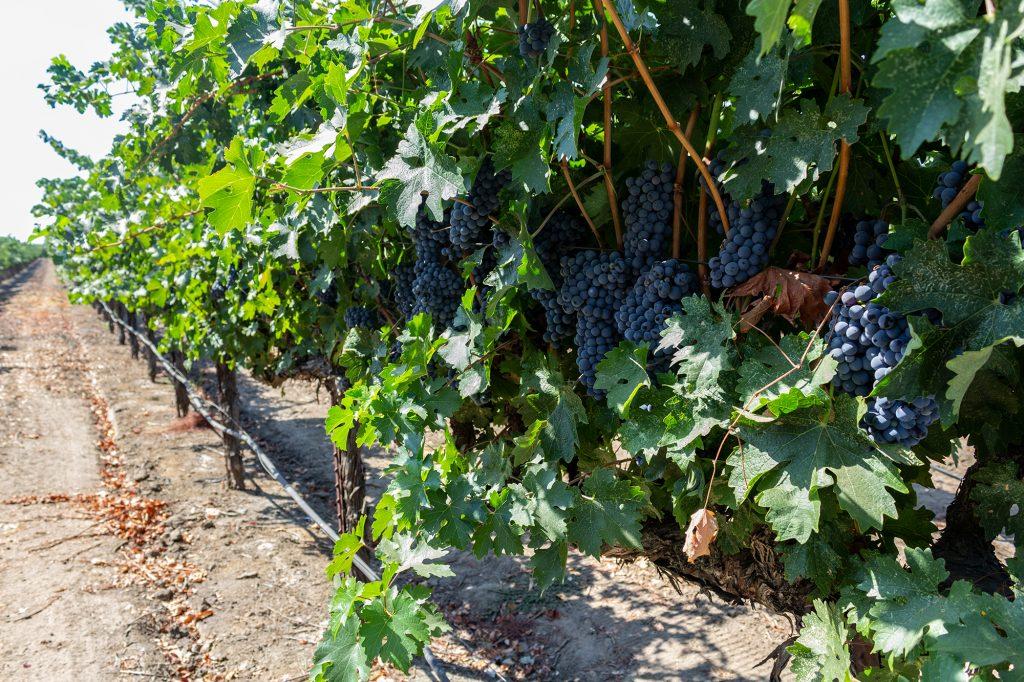 d'art wines vineyard