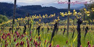 Springtime in the Vineyards