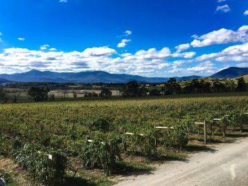 Yering Vineyard