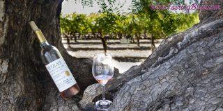 A Summer Afternoon at Retzlaff Vineyards