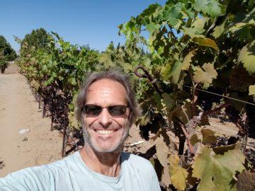 Enoteca 5 Michael vineyard