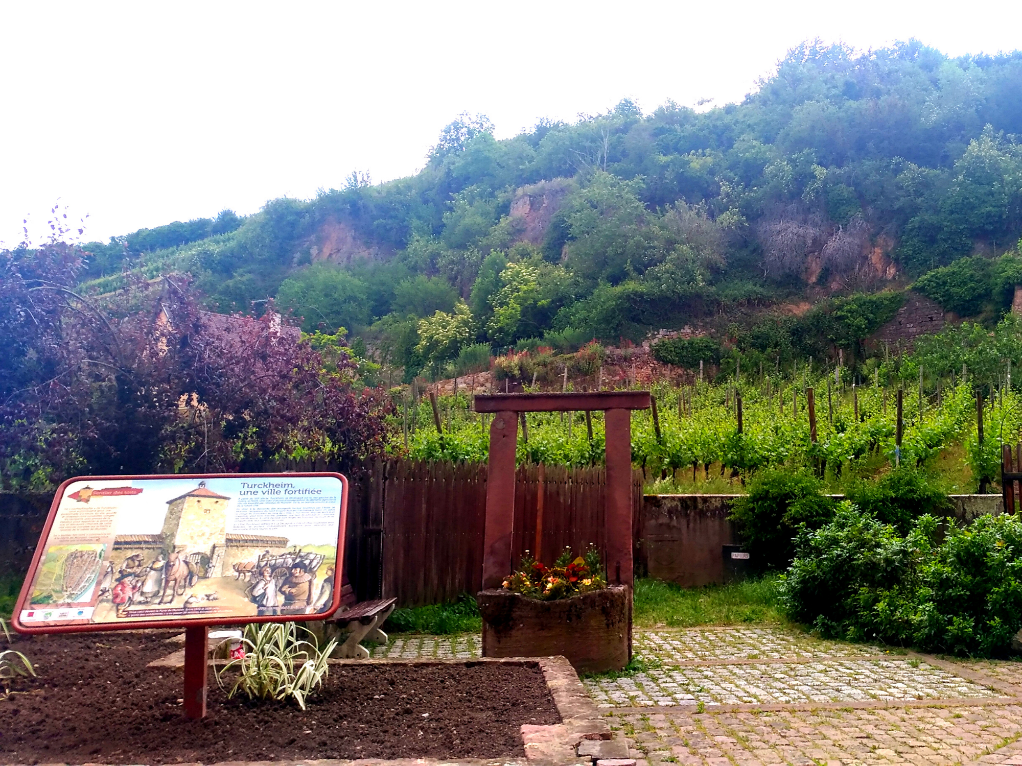Visiting Alsace Wine Route