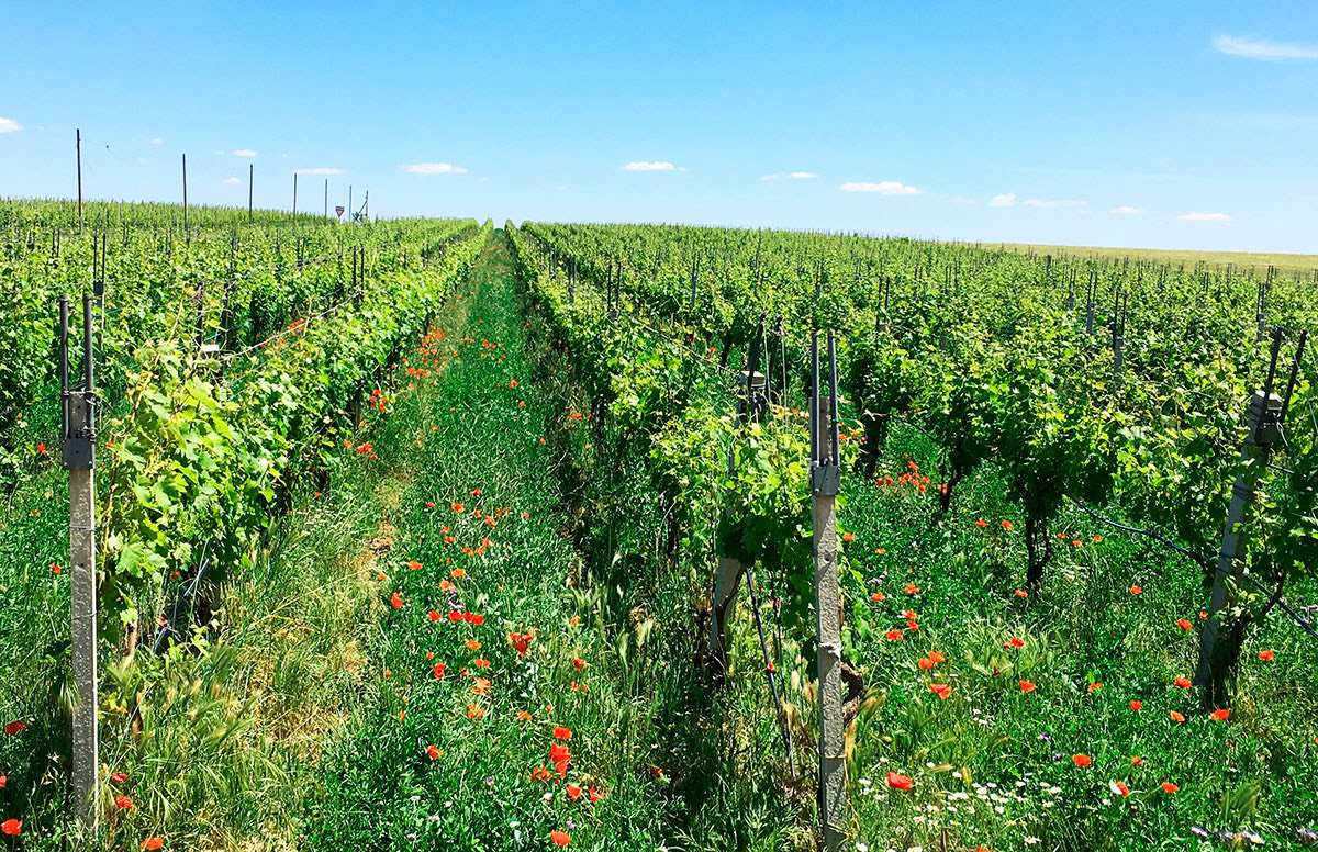 The Surprise of the Apulian Wines – The Cantina Gentile
