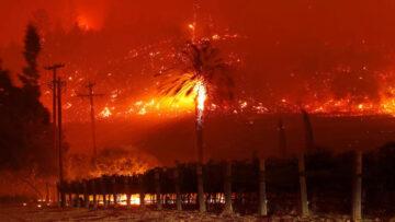 Wine Report Fires