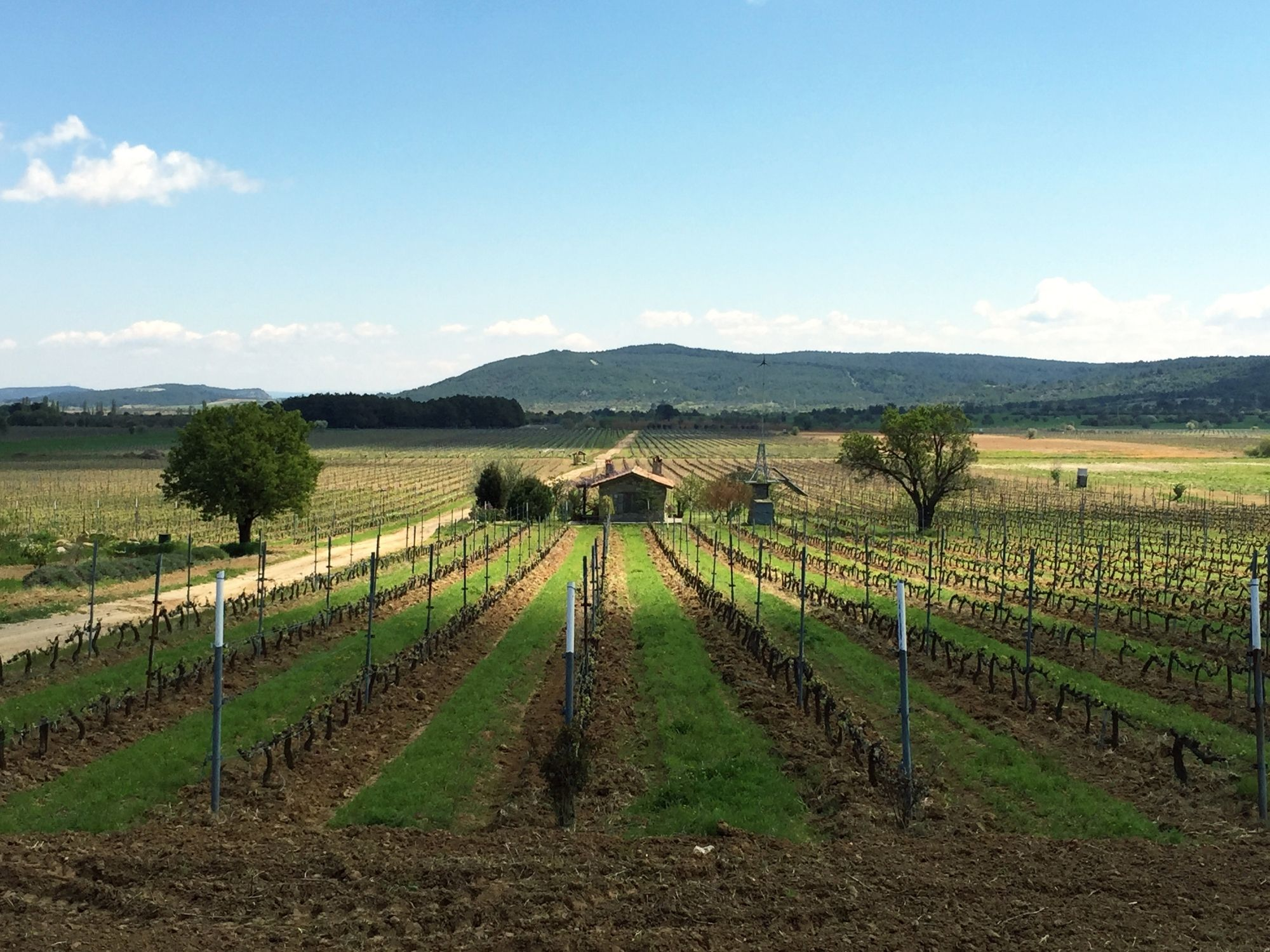 A Family Vineyard on Gallipoli Peninsula: Suvla Wines