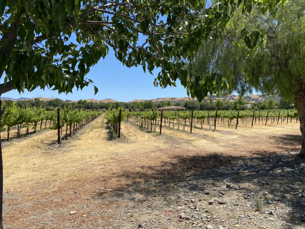 Ruby Hill Afternoon Vineyard
