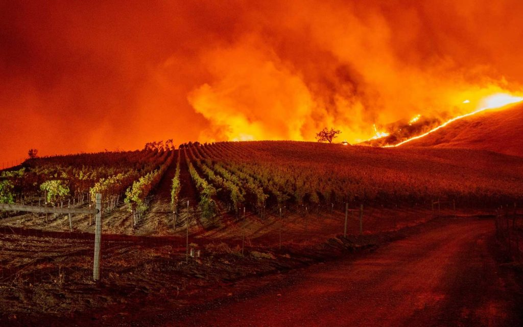 Smoke Taint reaches the vines